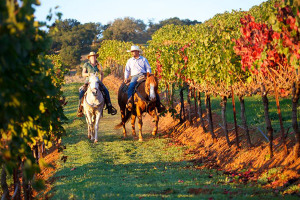 Routes in the Euganean Hills, Horse riding trips in the Euganean Hills – Le Volpi agritourism in the Euganean Hills
