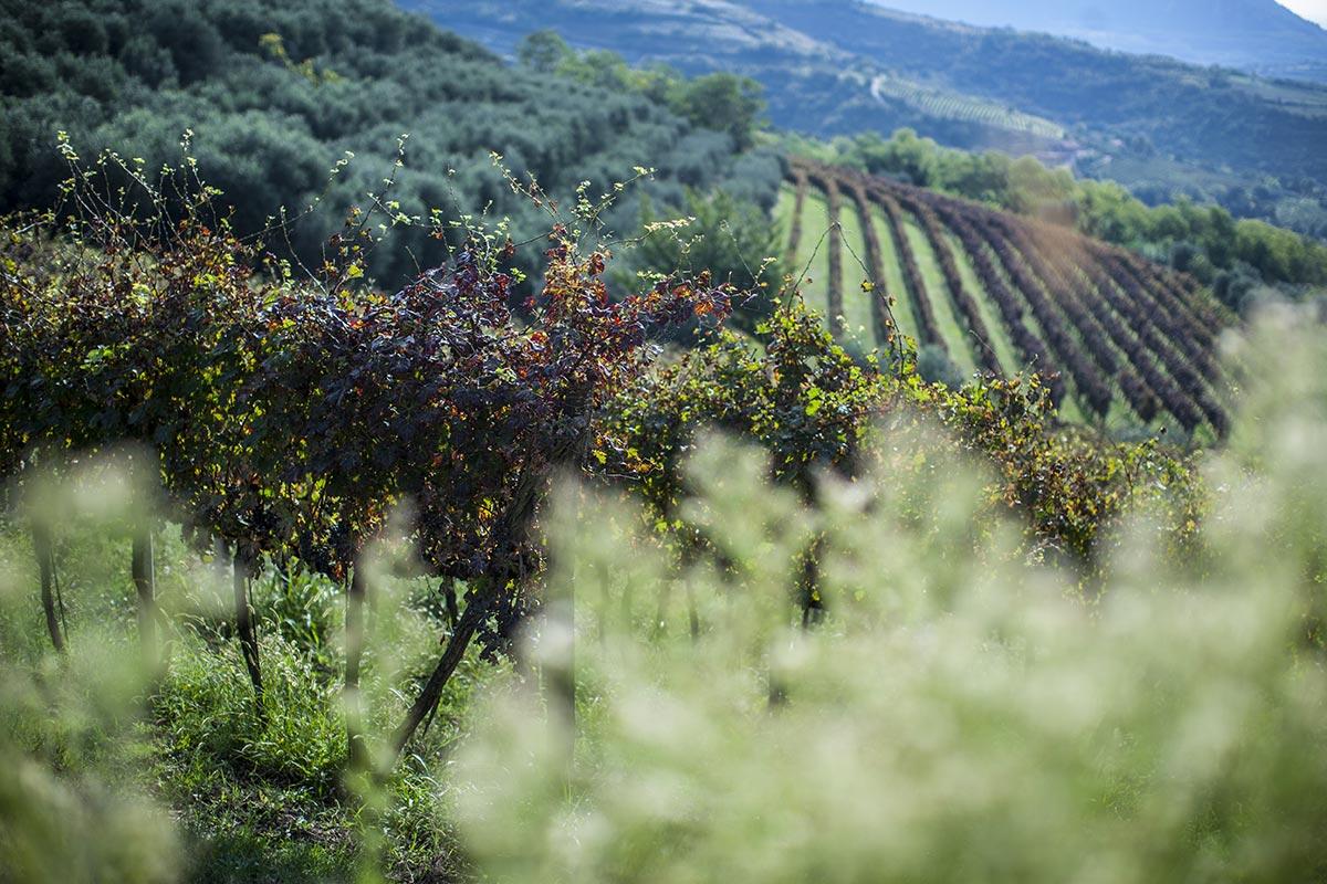 Vino italiano dei colli euganei - italian hills wine