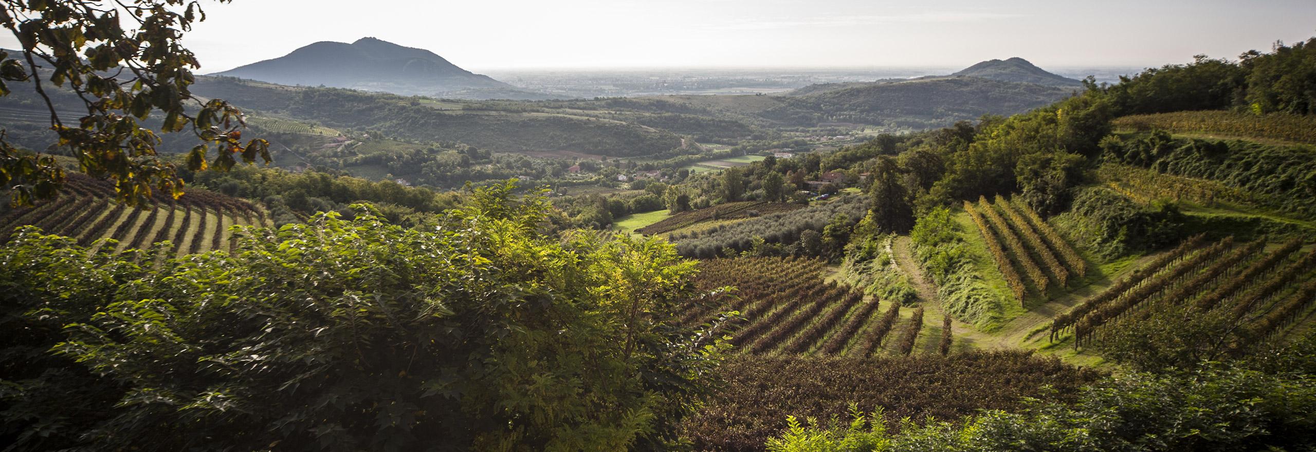 colli-euganei-baone-Azienda-Agricola-Le-Volpi