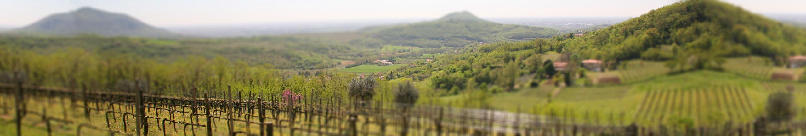 Agriturismo Colli Euganei - Le Volpi, un'azienda agricola con produzione vino e olio