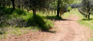 Agriturismo vicino Galzignano Terme - Le volpi azienda agricola
