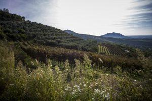ネイ丘陵の収穫祭、エウガネイ丘陵のイベント、ヴェネト州のイベントと収穫祭