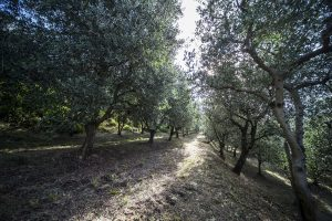 Walking routes in the Euganean Hills