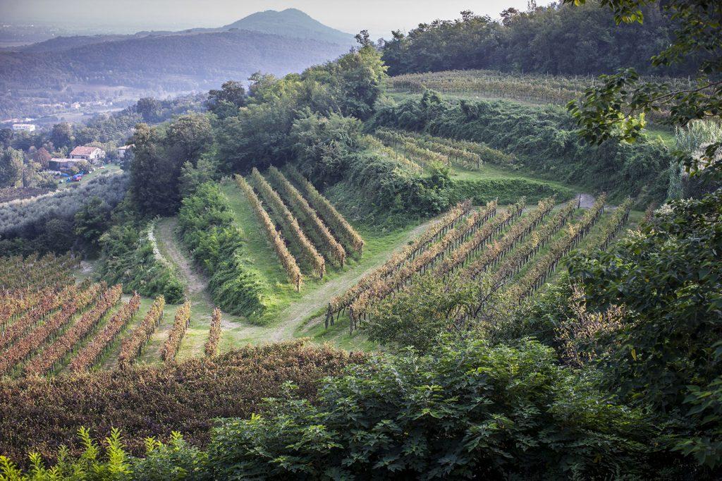 Agriturismo nei Colli Euganei – Le volpi – …ascoltando i suoni del bosco