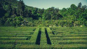 Agriturismo Baone- Giardino di Valsanzibio